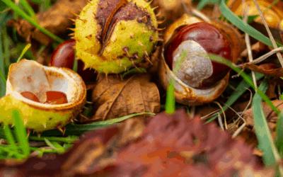 Kostanjev piknik – nedelja 08.oktober